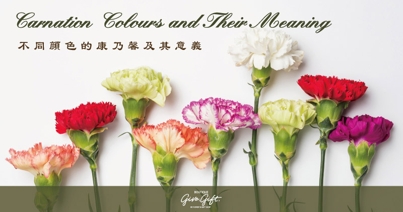 Carnation Colours and Their Meaning