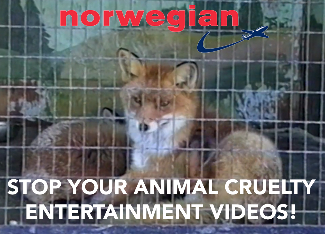 Norwegian: Stop Your Animal Cruelty Entertainment Videos!